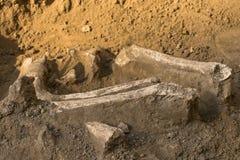 Archäologische Aushöhlungen und Entdeckungsknochen eines Skeletts in einer menschlichen Beerdigung, ein Detail der alten Forschun stockfoto