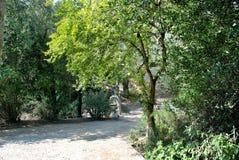 Archäologische Fundstätte der alten Olympia in Griechenland Lizenzfreie Stockfotografie