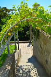 The arch above the stairs from grapes. The arch of the staircase is decorated with grapes on the territory of the Vorontsov Palace Stock Photos