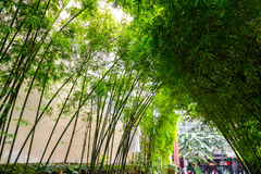 The arch of bamboo. The arch of bamboo leaned toward each other Stock Photo