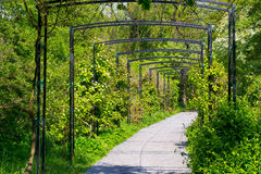 Arch. In the Botanical garden of the city Kaliningrad Stock Images