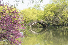 Arch bridge and peach blossom. This photo was taken in West Lake Cultural Landscape of Hangzhou, Zhejiang province, china Stock Image