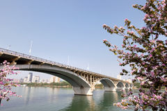 Arch bridge in spring Royalty Free Stock Photography