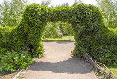 Arch of the bushes. Artificially created ornamental garden arch of green bushes Royalty Free Stock Images