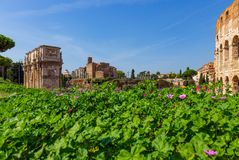 Arch of Constantine and The Colosseum at the Roman Forum in Rome royalty free stock photography
