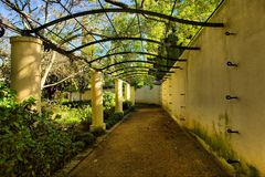 Arch with corridor covered by vine. Shot in wine farm/estate, near Stellenbosch, Western Cape, South Africa Stock Images