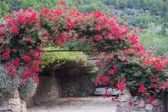 Arch decorated with pink Bougainvillea flowers in Son Serralta de Dalt. Estellencs, Majorca royalty free stock images