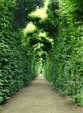 Arch, decorated with plants. In Schonbrunn garden, Vienna Royalty Free Stock Images