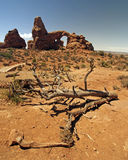Arch and desert scene in Arches National Park Royalty Free Stock Images
