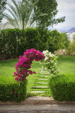 Arch of flowers bougainvillaea on a green glade Stock Images