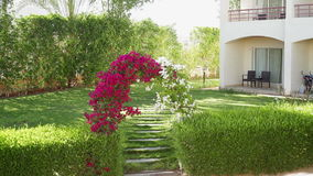 Arch of flowers bougainvillaea stock video
