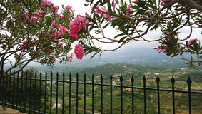 Arch with flowers of oleander, a beautiful view of the fields and fence in the foregroundGreece, Crete. Arch with flowers of oleander, a beautiful view of the Stock Photos