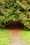 Arch footpath between coniferous trees Royalty Free Stock Photos