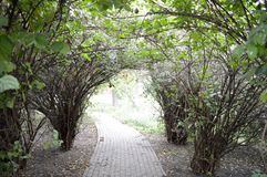 Arch of green bushes and branches. Trees Royalty Free Stock Images