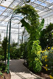 Arch. In greenhouse in a Botanical Garden Stock Image