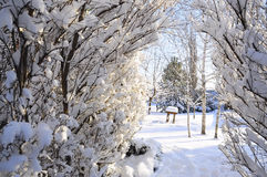 Arch made of branches covered with bushes beautiful fluffy snow. In a sunny winter morning. In the background is seen the home garden. Natural beautiful frosty Royalty Free Stock Images