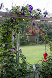Arch of Morning Glories Stock Images