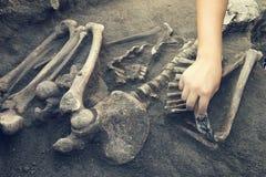 Arch?ologische Aush?hlungen Arch?ologe mit Werkzeugen leitet Forschung auf menschlicher Beerdigung, Skelett, Sch?del lizenzfreie stockfotos