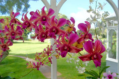 Arch of Orchids Royalty Free Stock Photography