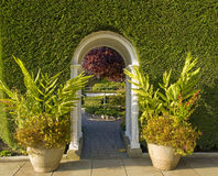 Arch passage. Arch-shaoed passage through the green fence framed by potted plants Stock Images