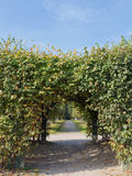 Arch of plants. Arch of green plants and dirt path in the park in the regular style Stock Photo