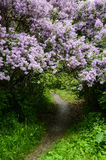 Arch from plants lilac Royalty Free Stock Photo