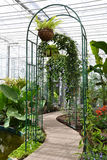 Arch and trail in Greenhouse. Beautiful terrace full with flower pots in a Botanical Garden Royalty Free Stock Photo