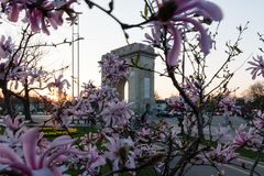 Arch of Triumph in Bucharest at sunset and magnolia spring tree. Around Royalty Free Stock Photos