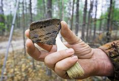 Archaeological finding during the field expedition. Archaeological discovery - a fragment of ancient ceramic vessel royalty free stock image