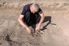 Archaeological excavation. The archaeologist in a digger process, researching the tomb, human bones, part of skeleton and skull in. The ground. Hands with tools royalty free stock photography
