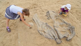 Archaeological excavation of dinosaur bones stock video