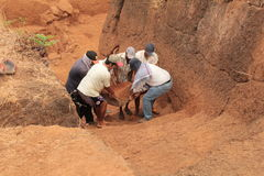 Archaeological excavation group Royalty Free Stock Image
