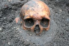 Archaeological excavation with skull still half buried in the ground. Archaeological excavation with old antique skull still half buried in the ground Stock Image