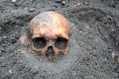 Archaeological excavation with skull still half buried in the ground. Archaeological excavation with old antique skull still half buried in the ground royalty free stock images