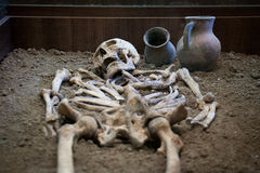 Archaeological excavations of an ancient human skeleton and human skull. Archaeological excavations of an ancient human homo sapiens man reasonable Neanderthal Royalty Free Stock Photos