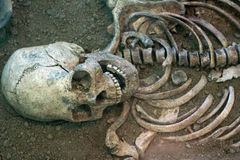 Archaeological excavations of an ancient human skeleton and human skull. Archaeological excavations of an ancient human sapiens man reasonable Neanderthal bones royalty free stock photos