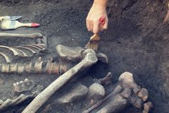 Archaeological excavations. archaeologist with tools conducts research on human burial, skeleton, skull.  stock photo