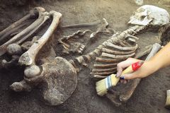 Archaeological excavations. archaeologist with tools conducts research on human burial, skeleton, skull.  royalty free stock photos