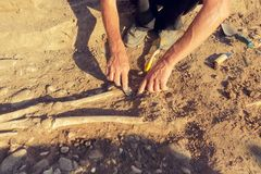 Archaeological excavations. archaeologist with tools conducts research on human burial, skeleton, skull.  stock photos