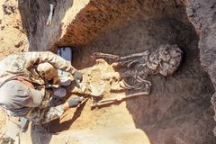 Archaeological excavations. archaeologist with tools conducts research on human burial, skeleton, skull.  royalty free stock photo