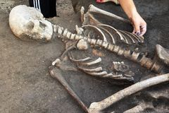 Archaeological excavations. archaeologist with tools conducts research on human burial, skeleton, skull.  stock image