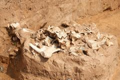 Archaeological excavations. In archaeology, excavation is the exposure, processing and recording of archaeological remains. An excavation site or `dig` is a royalty free stock image
