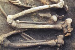 Archaeological excavations and finds bones of a skeleton in a human burial, a detail of ancient research, prehistory.  royalty free stock photos