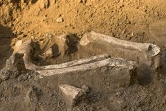 Archaeological excavations and finds bones of a skeleton in a human burial, a detail of ancient research, prehistory.  stock photo