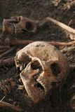 Human remains excavated: close up of two skeletons with skulls Royalty Free Stock Photography