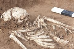 Archaeological excavations. Human remains bones of skeleton, skulls in the ground, with artefacts found in the tomb, ceramic jar royalty free stock images