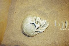 Archaeological excavations of human remains in the sand. Ancient human skull. Living systems Museum in Moscow, Russia. November 2018 stock images