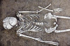 Archaeological excavations. Human remains skeleton with skull is half in the ground. Real science digger process. stock photography