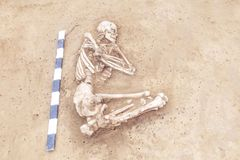 Archaeological excavations man and finds bones of a skeleton in a human burial, working tool, ruler, a detail of ancient resear. Ch, prehistory stock image