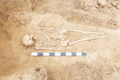 Archaeological excavations man and finds bones of a skeleton in a human burial, working tool, ruler, a detail of ancient resear. Ch, prehistory stock images